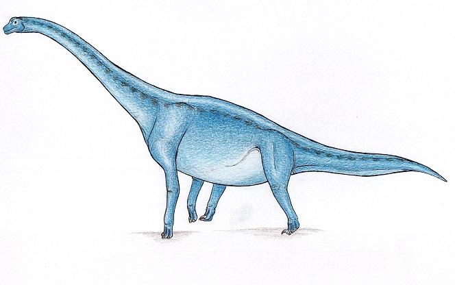apatosaurus vs diplodocus - 664×416